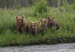 bear_family_small